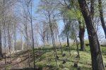 Vilijampolėsžydų kapinės